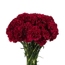 Carnations - Burgundy (200 stems)