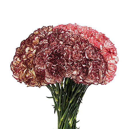 Carnations, Assorted Novelties (200 stems)