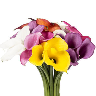 Mini Calla Lily - Assorted 40cm -  100 Stems