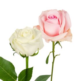 Roses, Light Pink and White Combo (125 stems)
