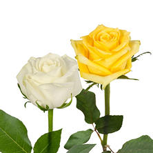 Roses, Yellow and White Combo (125 stems)