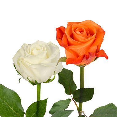 Roses, Orange and White Combo (125 stems)