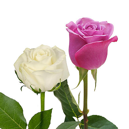 Roses, Lavender and White Combo (125 stems)