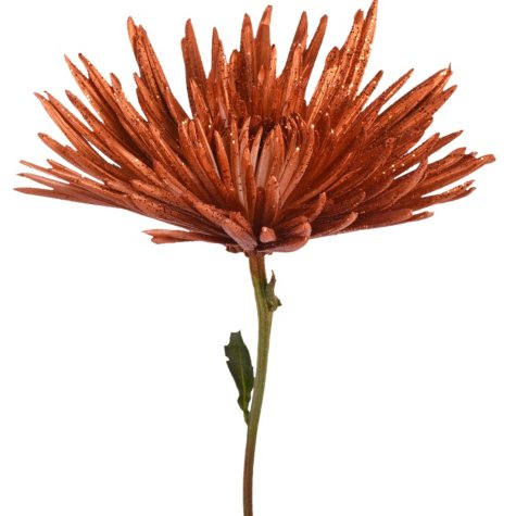 Painted Anastasia Spider, Metallic Orange with Glitter (Choose 50 or 100 stems)
