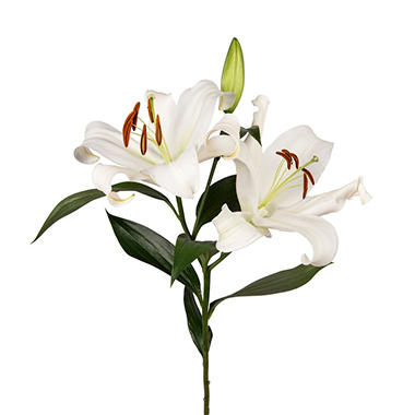 Oriental Lily, White (Choose stem count)