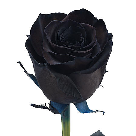 Roses, Tinted Black (choose 50, 75 or 100 stems)