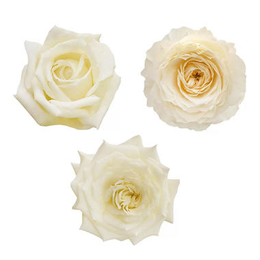 garden roses white 36 stems