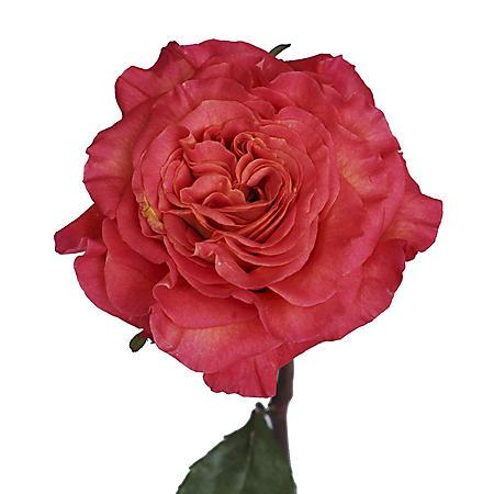 Garden Roses, Sunset (36 stems)