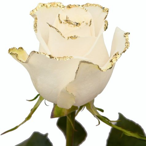 Roses, White with Gold Glitter (choose 50 or 100 stems)