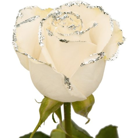 Roses, White with Silver Glitter (choose 50 or 100 stems)