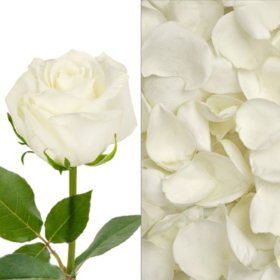 Bulk rose petals sams club roses and petals combo white 75 stems and 2000 petals mightylinksfo