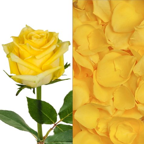 Roses and Petals Combo, Yellow (75 stems and 2,000 petals)