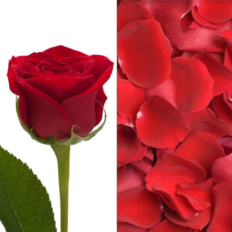 Roses and Petals Combo, Red (75 stems and 2,000 petals)