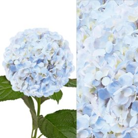 Hydrangea and Petals Combo, Blue (20 stems and 8 packs)