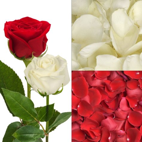 Roses and Petals Combo, Red and White (75 stems and 2,000 petals)