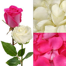 Roses and Petals Combo, Hot Pink and White (75 stems and 2,000 petals)