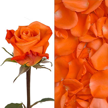 Roses and Petals Combo, Orange (75 stems and 2,000 petals)