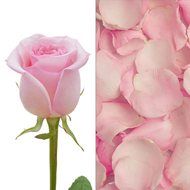 Roses and Petals Combo, Light Pink (75 stems and 2,000 petals)