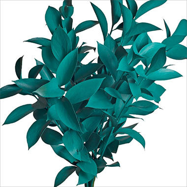Ruscus - Painted Aquamarine - 120 Stems