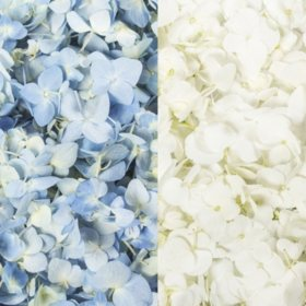 Hydrangea Petals, Blue and White (16 pk.)