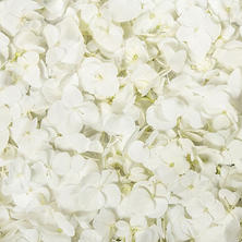 Hydrangea Petals, White (choose 16 or 26 packs)