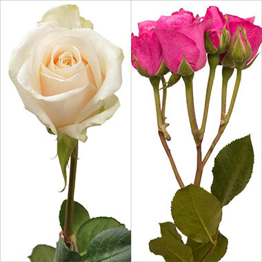 White Roses and Hot Pink Spray Roses Combo (105 stems)