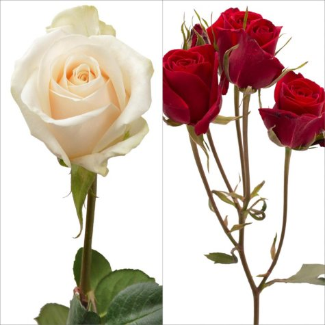 White Roses and Red Spray Roses Combo (105 stems)