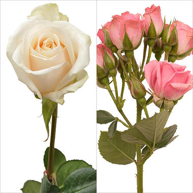 Spray Roses, White and Light Pink Combo (105 stems)