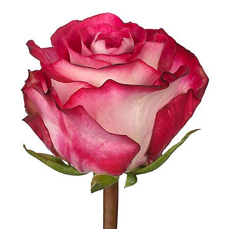 Very Long Stem Roses, Riviera (100 stems)