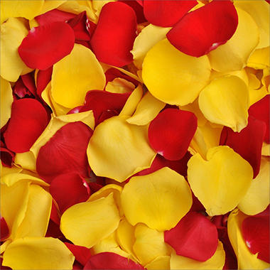 Rose Petals (Choose Your Color)