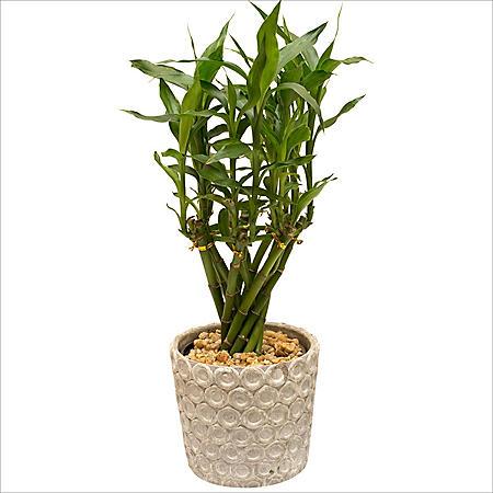 "Hillary Bamboo Planter - 4"""