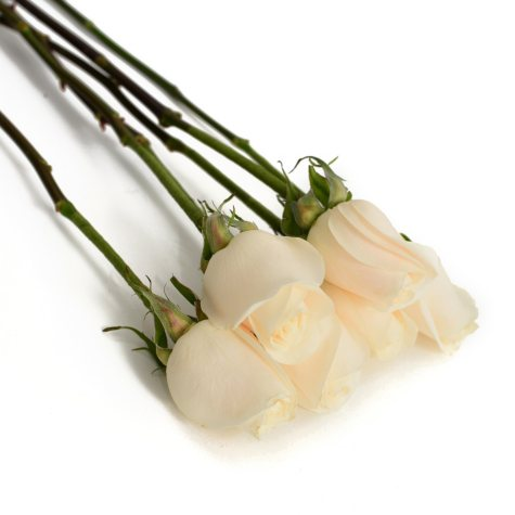 Do-It-Yourself Wired Roses, White (50 or 100 stems)