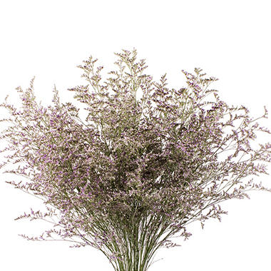 Limonium, Natural with Glitter (15 bunches)