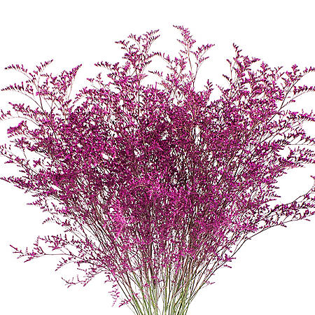 Limonium, Tinted Hot Pink (15 bunches)