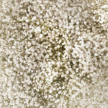 Gypsophilia, Mirabella (5 or 10 bunches)