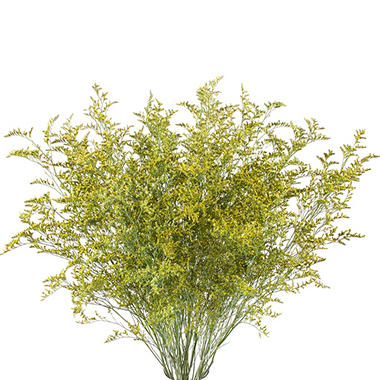 Limonium, Tinted Yellow with Glitter (15 bunches)
