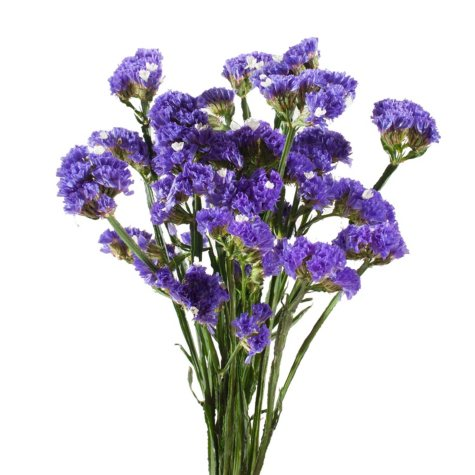 Statice, Purple (200 stems)