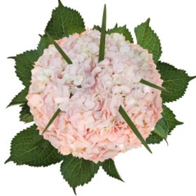 Hydrangea and Lily Grass Bouquet, Light Pink (8 bouquets)