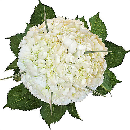 Hydrangea and Lily Grass Bouquet, White (8 bouquets)
