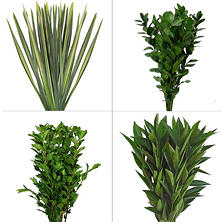 Assorted Greenery #8 (175 Stems)