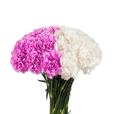 Carnations Wedding Pack, White and Lavender Combo (200 stems)