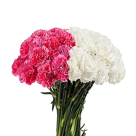 Carnations, White and Hot Pink Combo (200 stems)