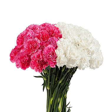 Carnations Wedding Pack, White and Hot Pink Combo (200 stems)