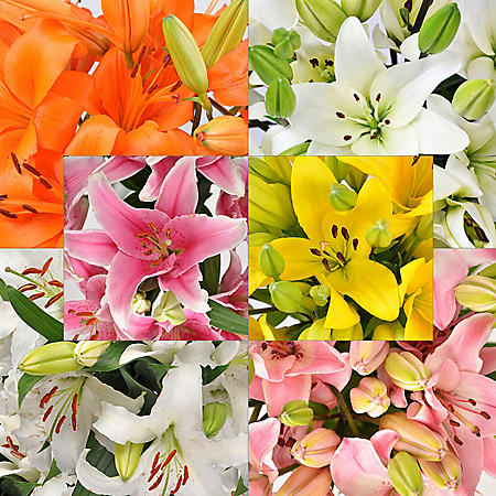 Oriental and Asiatic Lilies Combo, Assorted (60 Stems)