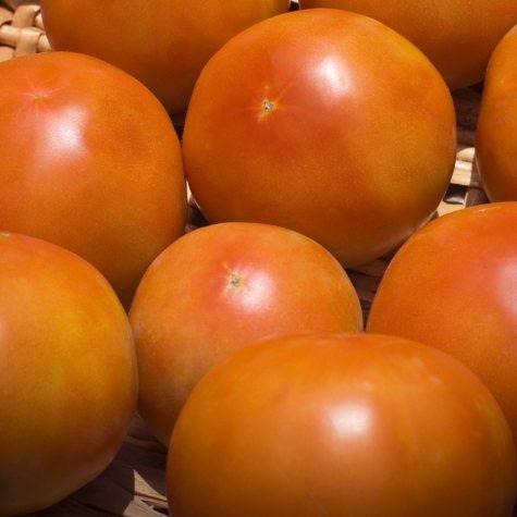 Tomatoes - 25 lbs.