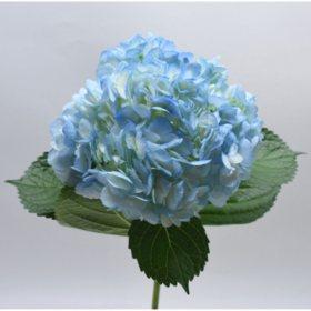 Bulk hydrangeas sams club hydrangea premium blue choose 20 or 24 stems mightylinksfo