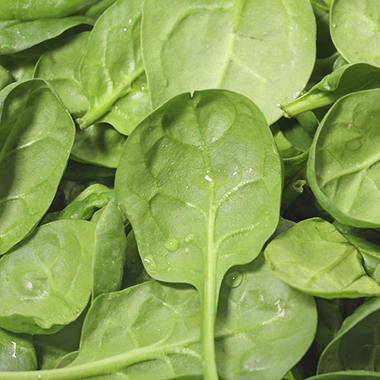 Spinach - 1 lb.
