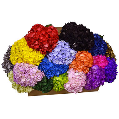 Painted Hydrangea, Assorted Colors (choose 24 or 50 stems)