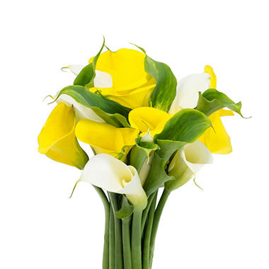 Calla Lily, Assorted Colors (35 stems)