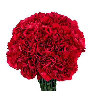 Carnations, Red (150 stems)